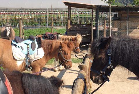 La barre d'attache et les poneys